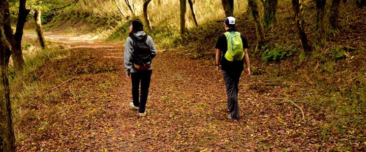 秋晴れの特異日、比叡山に少し早めの紅葉狩りに。