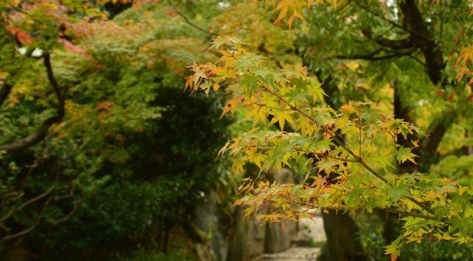 【写真】相楽園@神戸の紅葉はやや時期尚早だった件。