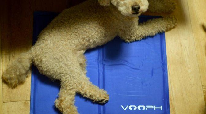 【犬の夏対策】VOOPH ペットクールマットがOKされた件。