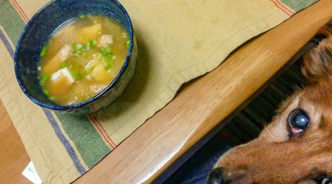 【ダイエット】夕食は味噌汁、ダックスを添えて(炭水化物制限中)